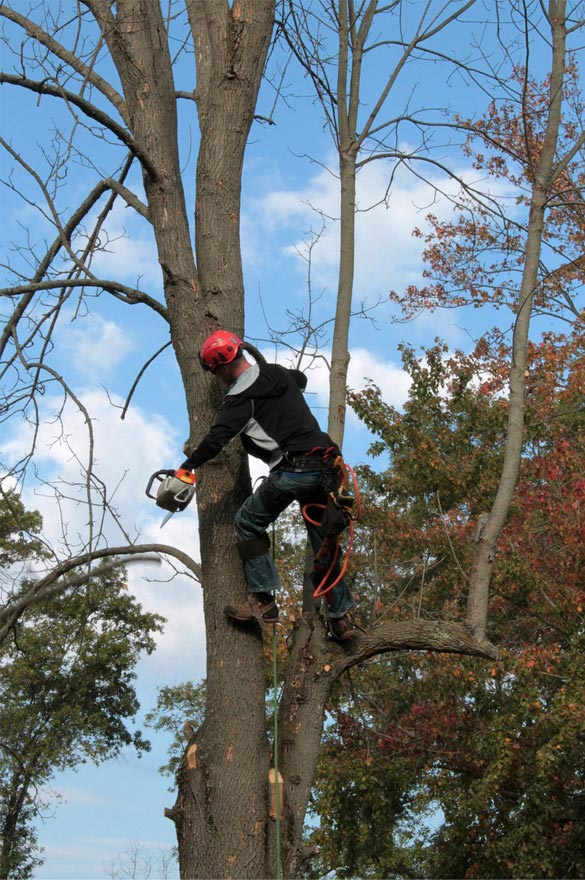 Tree Trimming in Deephaven with chainsaw and safety equipment.