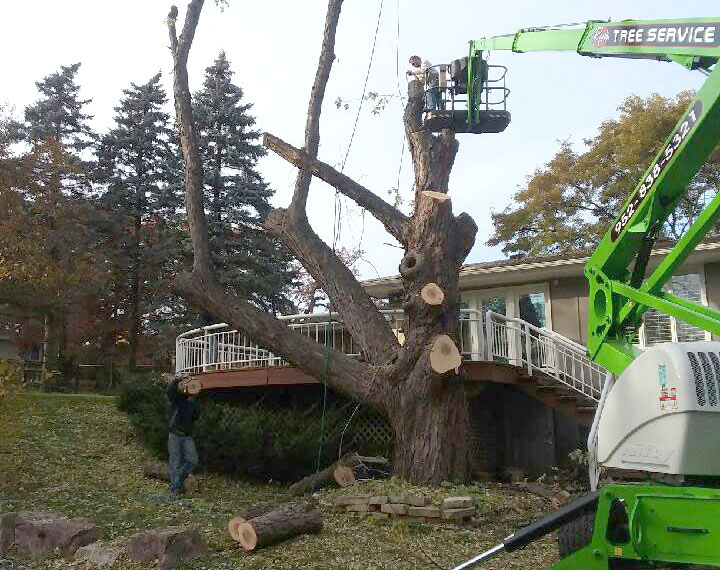 Tree Branch Removal